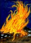 11 Feuersalamander Naturwesen-Essenz  --  30ml Pipette
