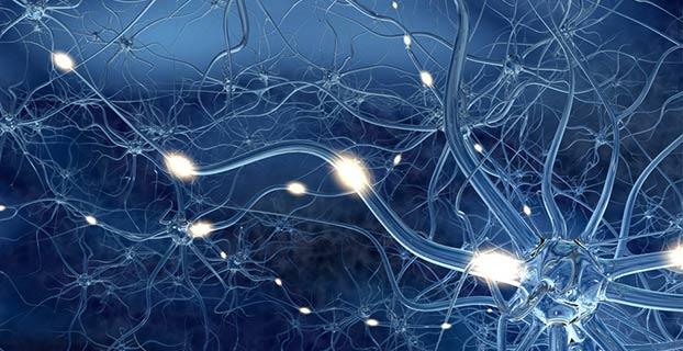 Synapsen-1069811 10201573597525625 1464718252 nZWPH-Institut